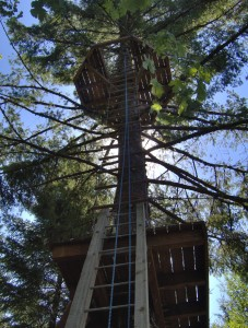 zip line ladder